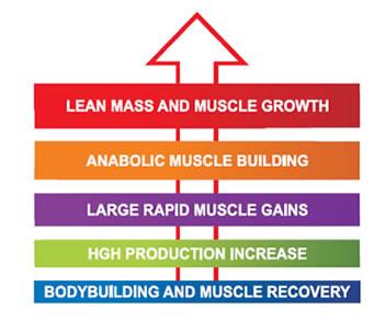 beta-ecdysterone anabolic environment enhancer reviews